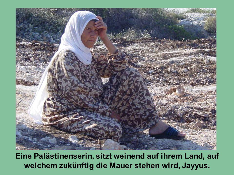 Eine Palästinenserin, sitzt weinend auf ihrem Land, auf welchem zukünftig die Mauer stehen wird, Jayyus.
