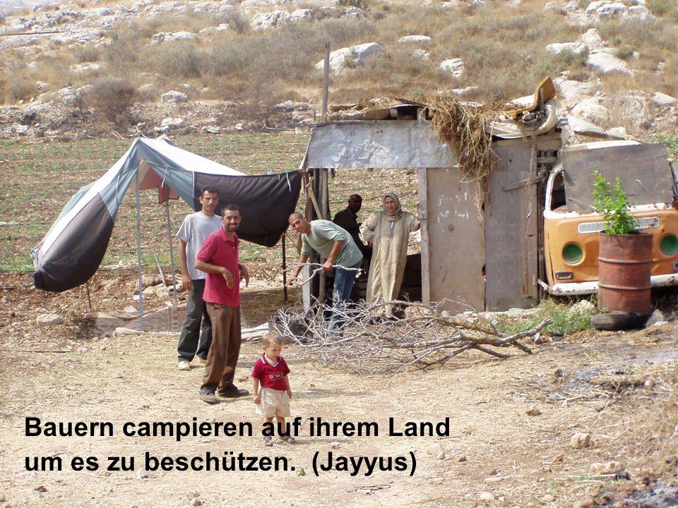 Bauern campieren auf ihrem Land um es zu beschützen. (Jayyus)