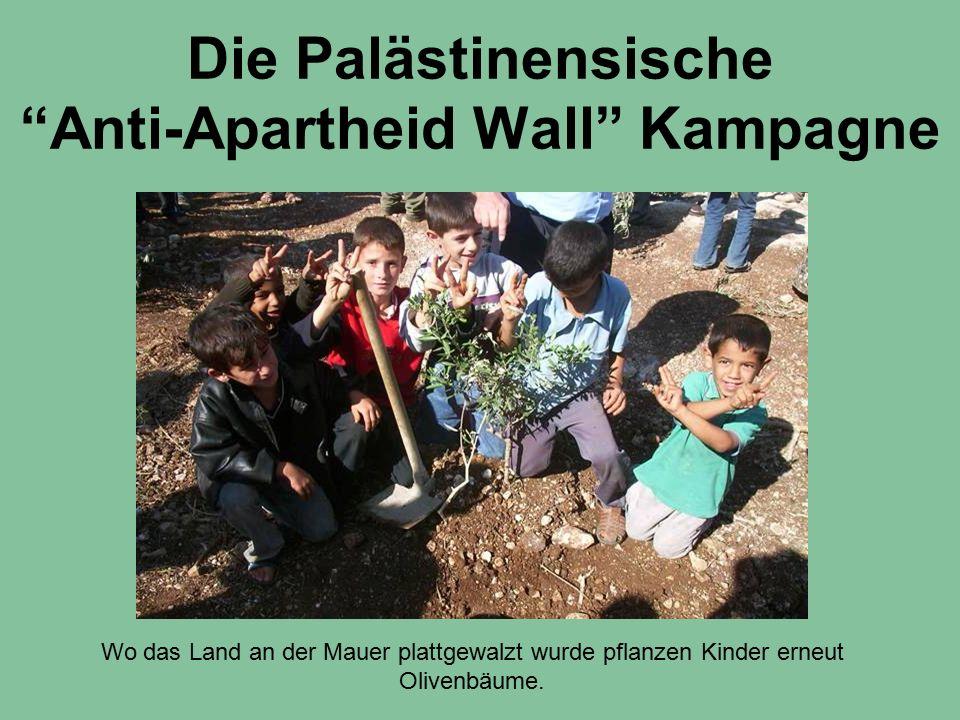 """Die Palästinensische """"Anti-Apartheid Wall"""" Kampagne Wo das Land an der Mauer plattgewalzt wurde pflanzen Kinder erneut Olivenbäume."""