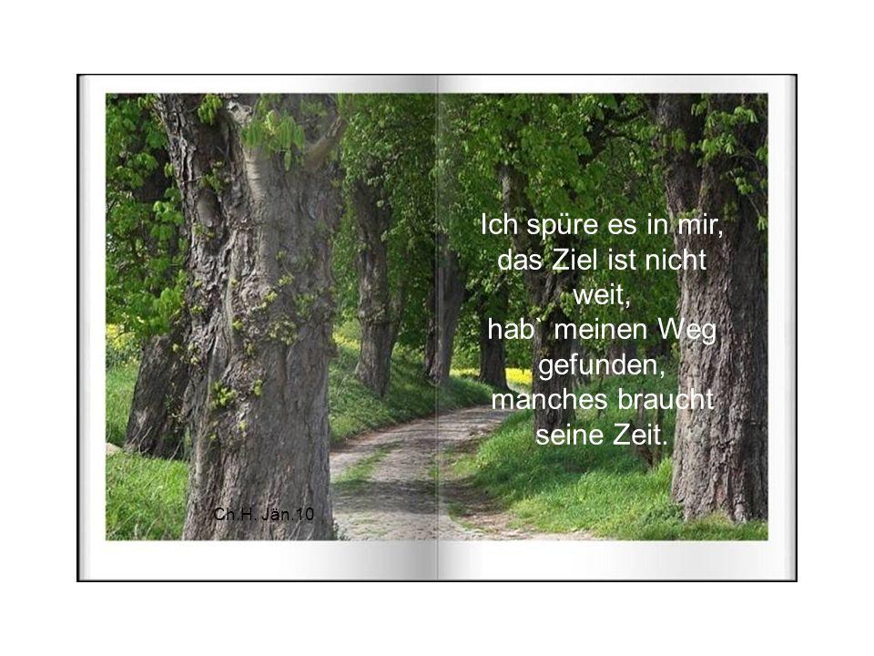 Ein Bild der Vollkommenheit ist für mich dieser Baum. Er steht für Kraft und Entwicklung, es ist wie ein Traum.