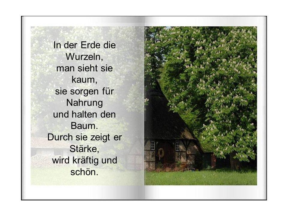 In der Erde die Wurzeln, man sieht sie kaum, sie sorgen für Nahrung und halten den Baum.