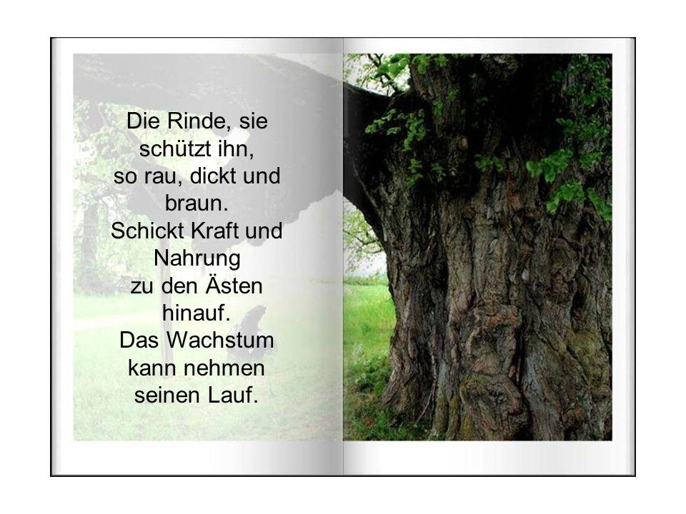 Sie tragen den Baum, und er kann aufrecht stehen. Wie ein Fels in der Brandung, wirkt der Stamm von dem Baum.