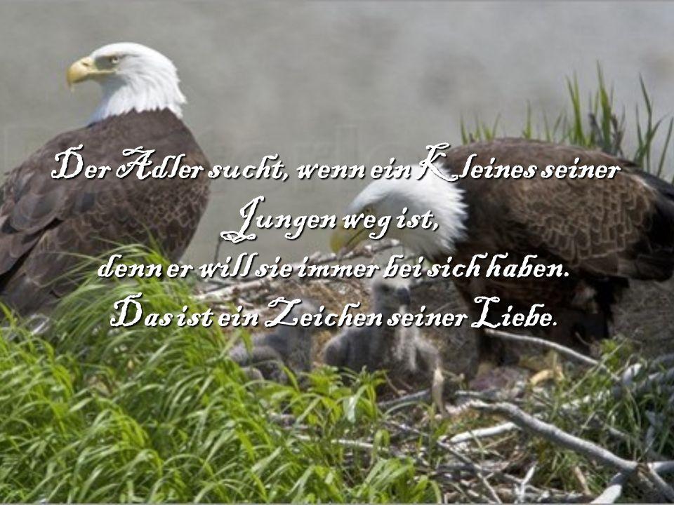 Der Adler sucht, wenn ein Kleines seiner Jungen weg ist, denn er will sie immer bei sich haben. Das ist ein Zeichen seiner Liebe.