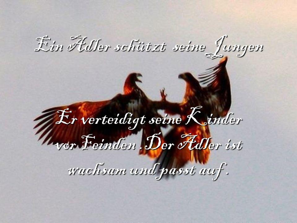 Ein Adler schützt seine Jungen Er verteidigt seine Kinder vor Feinden.Der Adler ist wachsam und passt auf.