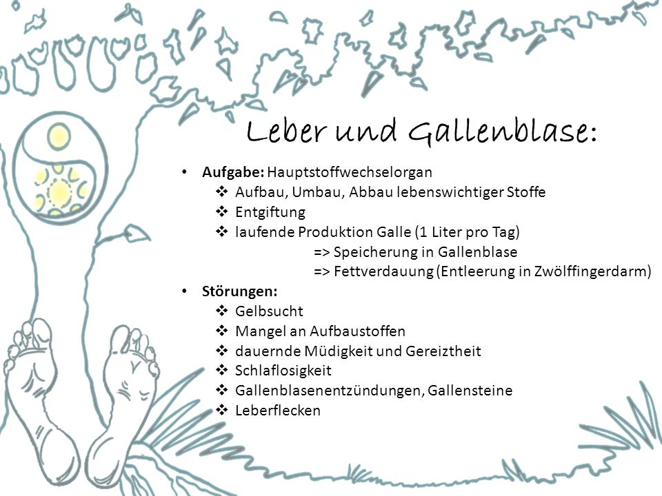 Leber und Gallenblase: Aufgabe: Hauptstoffwechselorgan  Aufbau, Umbau, Abbau lebenswichtiger Stoffe  Entgiftung  laufende Produktion Galle (1 Liter