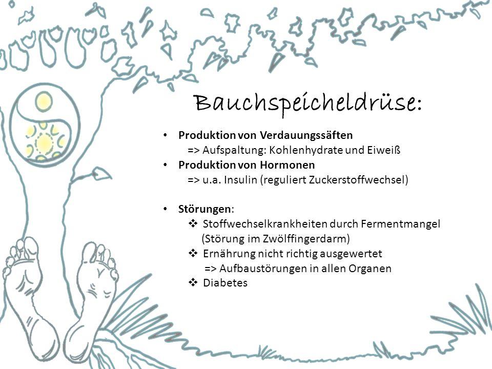 Bauchspeicheldrüse: Produktion von Verdauungssäften => Aufspaltung: Kohlenhydrate und Eiweiß Produktion von Hormonen => u.a. Insulin (reguliert Zucker