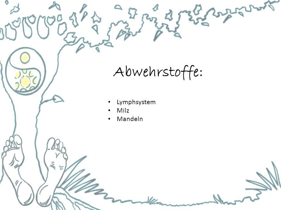 Abwehrstoffe: Lymphsystem Milz Mandeln