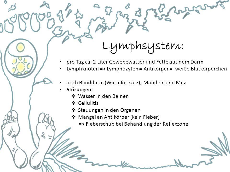 Lymphsystem: pro Tag ca. 2 Liter Gewebewasser und Fette aus dem Darm Lymphknoten => Lymphozyten = Antikörper = weiße Blutkörperchen auch Blinddarm (Wu