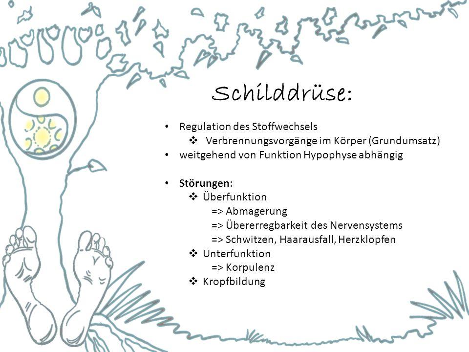 Schilddrüse: Regulation des Stoffwechsels  Verbrennungsvorgänge im Körper (Grundumsatz) weitgehend von Funktion Hypophyse abhängig Störungen:  Überf