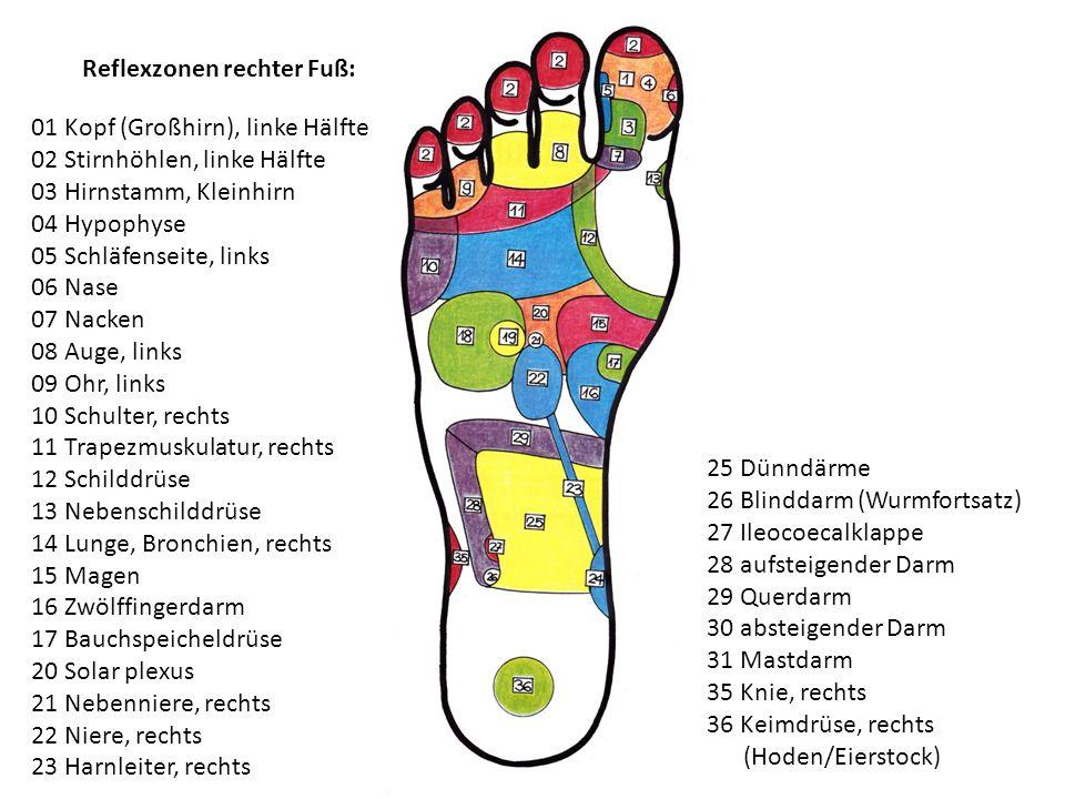Reflexzonen rechter Fuß: 01 Kopf (Großhirn), linke Hälfte 02 Stirnhöhlen, linke Hälfte 03 Hirnstamm, Kleinhirn 04 Hypophyse 05 Schläfenseite, links 06