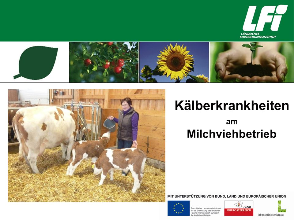 Kälberkrankheiten am Milchviehbetrieb