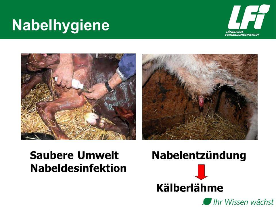 Nabelhygiene Saubere Umwelt Nabeldesinfektion Nabelentzündung Kälberlähme