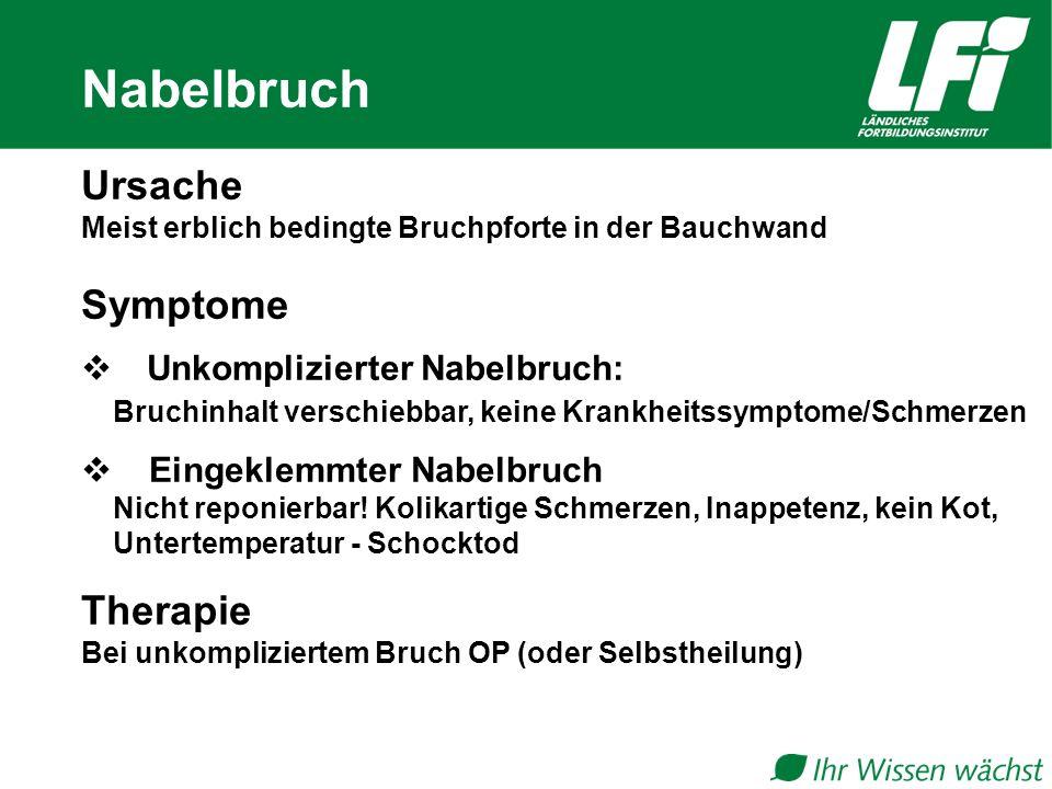 Ursache Meist erblich bedingte Bruchpforte in der Bauchwand Symptome  Unkomplizierter Nabelbruch: Bruchinhalt verschiebbar, keine Krankheitssymptome/Schmerzen  Eingeklemmter Nabelbruch Nicht reponierbar.