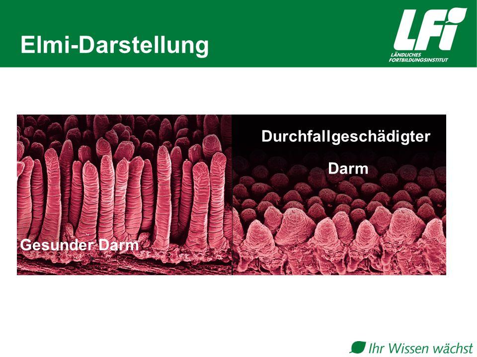 Elmi-Darstellung Gesunder Darm Durchfallgeschädigter Darm