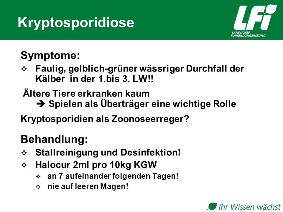 Kryptosporidiose Symptome:  Faulig, gelblich-grüner wässriger Durchfall der Kälber in der 1.bis 3.