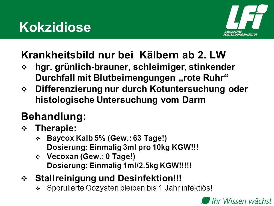 Kokzidiose Krankheitsbild nur bei Kälbern ab 2.LW  hgr.