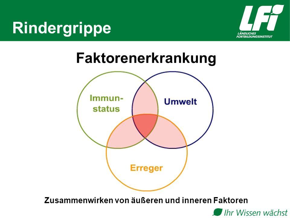 Rindergrippe Zusammenwirken von äußeren und inneren Faktoren Faktorenerkrankung