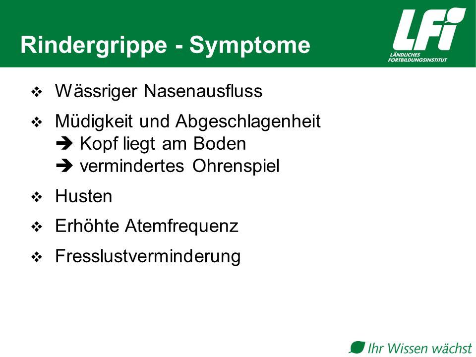 Rindergrippe - Symptome  Wässriger Nasenausfluss  Müdigkeit und Abgeschlagenheit  Kopf liegt am Boden  vermindertes Ohrenspiel  Husten  Erhöhte Atemfrequenz  Fresslustverminderung