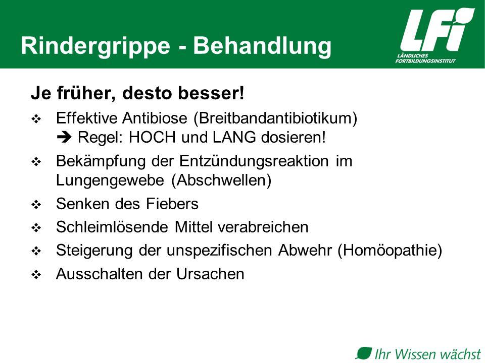 Rindergrippe - Behandlung Je früher, desto besser.