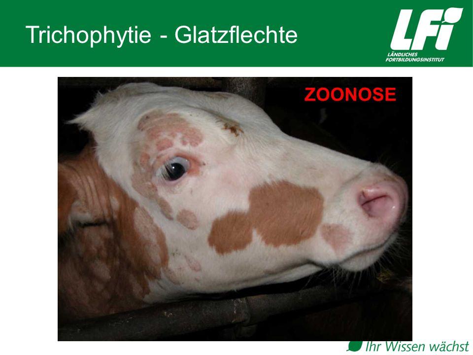 Trichophytie - Glatzflechte ZOONOSE