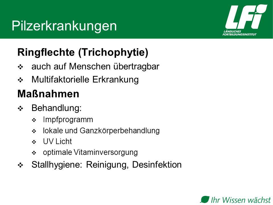 Pilzerkrankungen Ringflechte (Trichophytie)  auch auf Menschen übertragbar  Multifaktorielle Erkrankung Maßnahmen  Behandlung:  Impfprogramm  lokale und Ganzkörperbehandlung  UV Licht  optimale Vitaminversorgung  Stallhygiene: Reinigung, Desinfektion