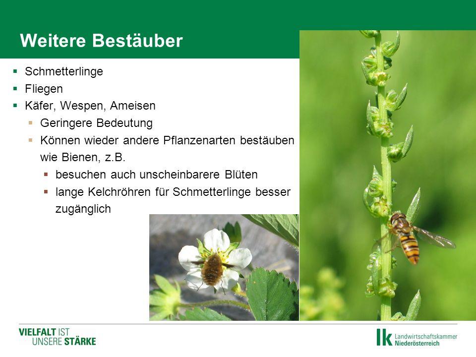 Weitere Bestäuber  Schmetterlinge  Fliegen  Käfer, Wespen, Ameisen  Geringere Bedeutung  Können wieder andere Pflanzenarten bestäuben wie Bienen,