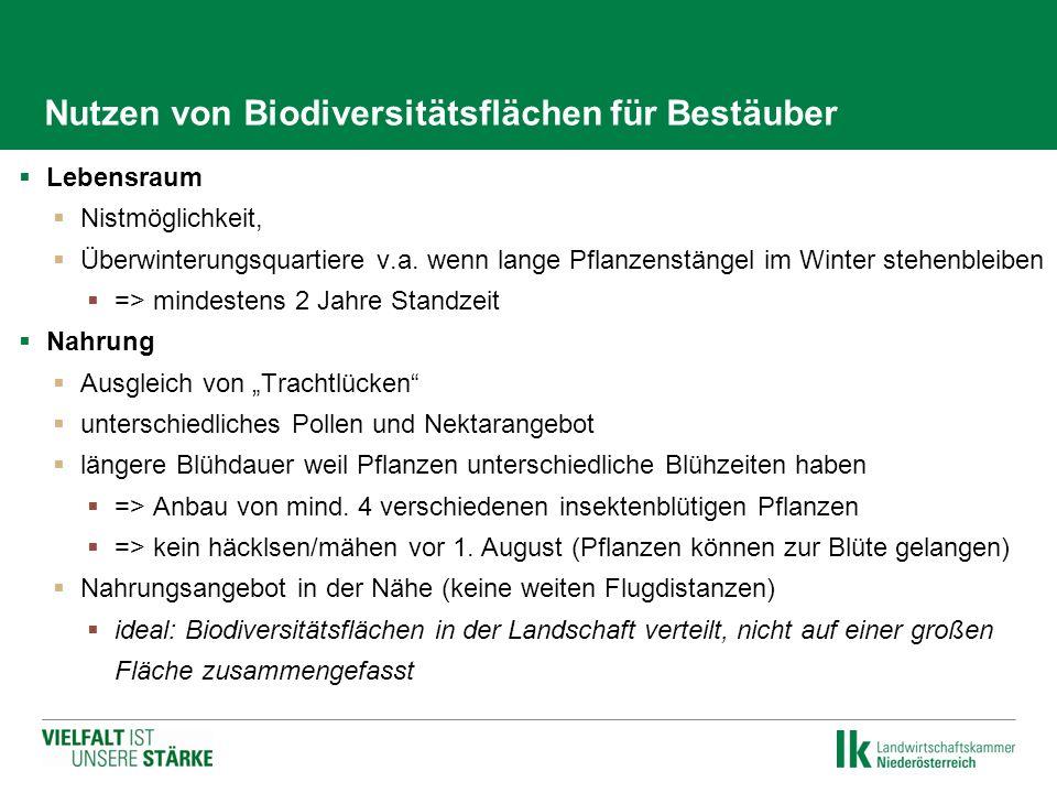 Nutzen von Biodiversitätsflächen für Bestäuber  Lebensraum  Nistmöglichkeit,  Überwinterungsquartiere v.a. wenn lange Pflanzenstängel im Winter ste