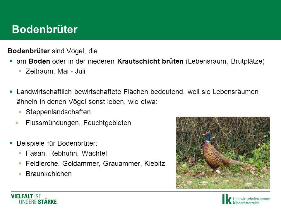 Bodenbrüter Bodenbrüter sind Vögel, die  am Boden oder in der niederen Krautschicht brüten (Lebensraum, Brutplätze)  Zeitraum: Mai - Juli  Landwirt
