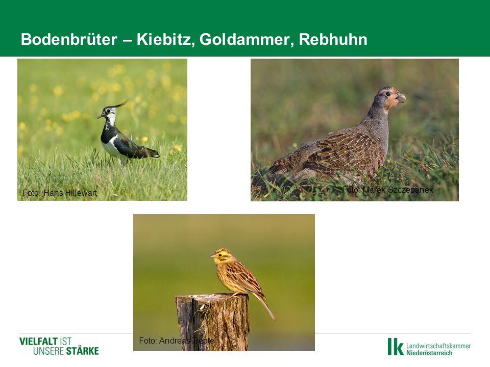 Bodenbrüter – Kiebitz, Goldammer, Rebhuhn Foto: Hans Hillewart Foto: Andreas Trepte Foto: Marek Szczepanek