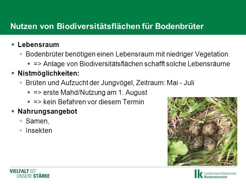 Nutzen von Biodiversitätsflächen für Bodenbrüter  Lebensraum  Bodenbrüter benötigen einen Lebensraum mit niedriger Vegetation  => Anlage von Biodiv