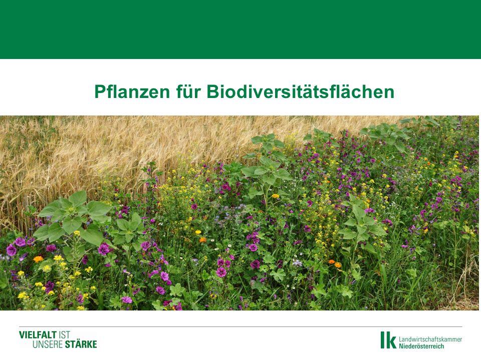  Pflanzen für Biodiversitätsflächen