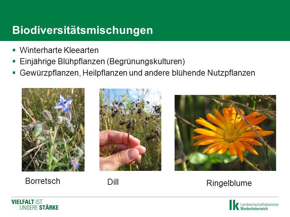 Biodiversitätsmischungen  Winterharte Kleearten  Einjährige Blühpflanzen (Begrünungskulturen)  Gewürzpflanzen, Heilpflanzen und andere blühende Nut