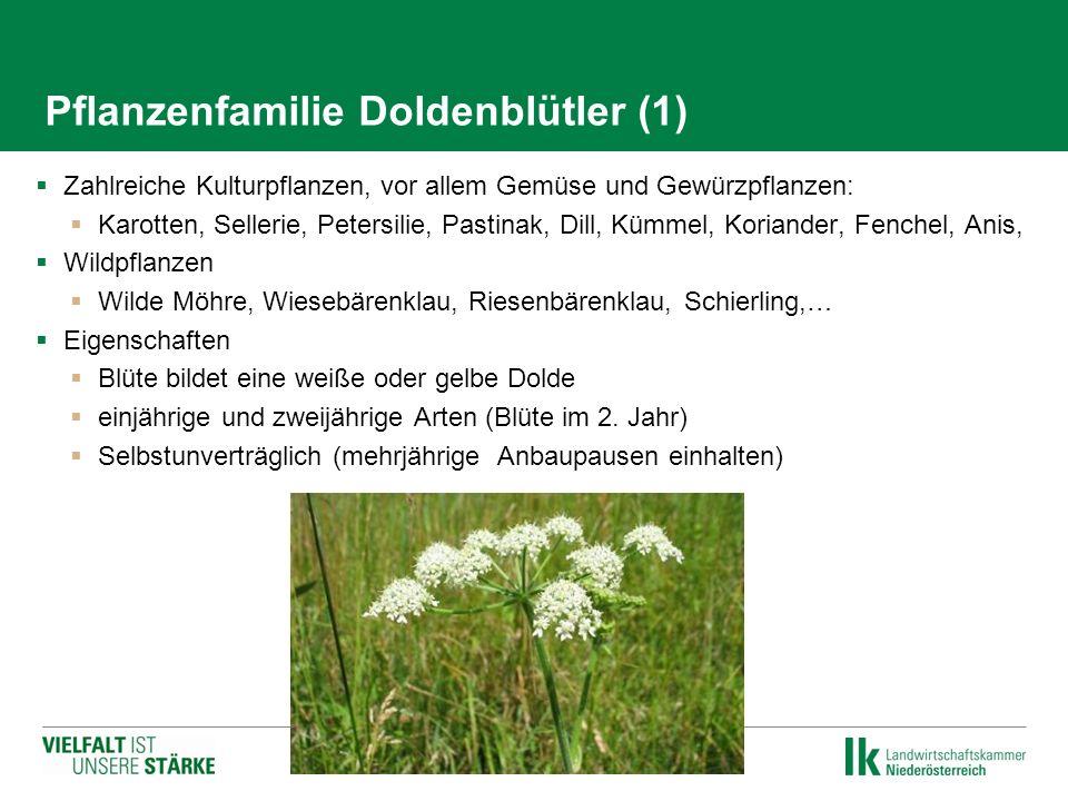 Pflanzenfamilie Doldenblütler (1)  Zahlreiche Kulturpflanzen, vor allem Gemüse und Gewürzpflanzen:  Karotten, Sellerie, Petersilie, Pastinak, Dill,
