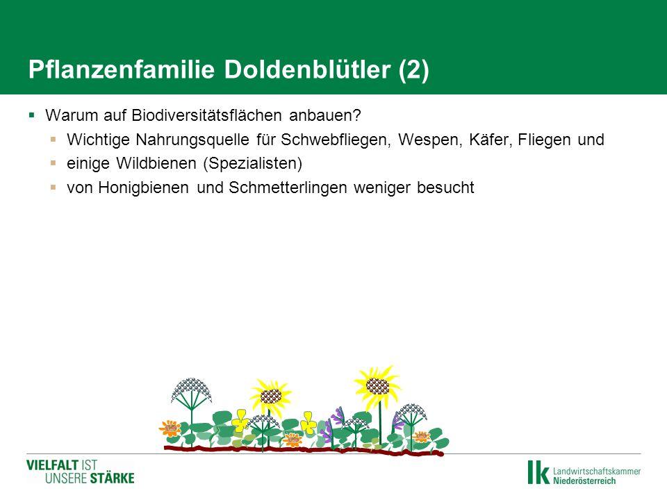 Pflanzenfamilie Doldenblütler (2)  Warum auf Biodiversitätsflächen anbauen?  Wichtige Nahrungsquelle für Schwebfliegen, Wespen, Käfer, Fliegen und 