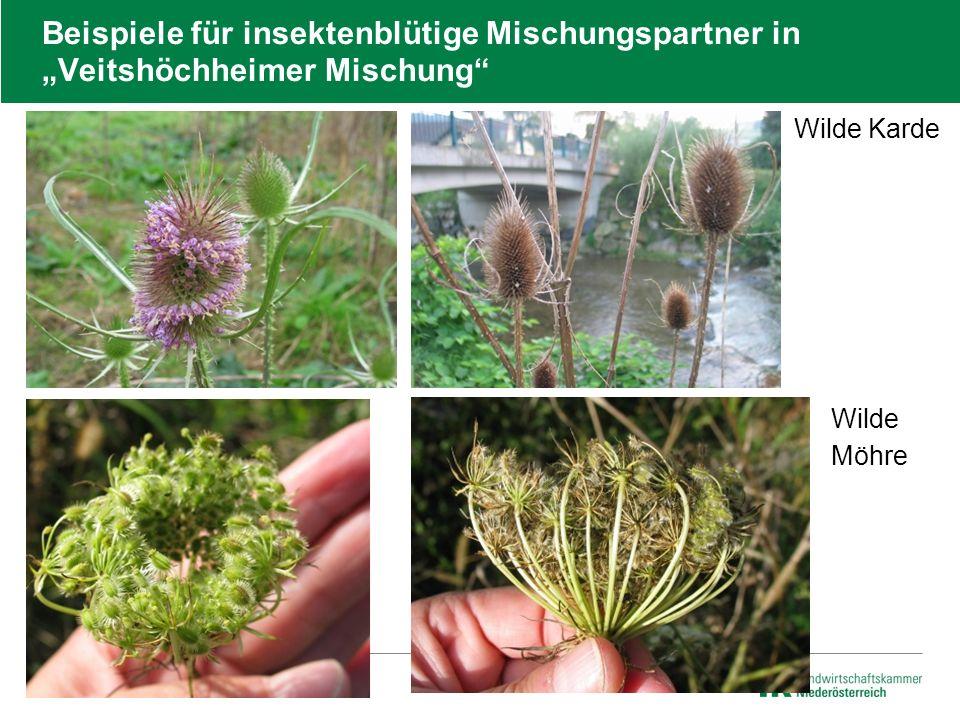 """Beispiele für insektenblütige Mischungspartner in """"Veitshöchheimer Mischung""""  Wilde Karde  Wilde  Möhre"""