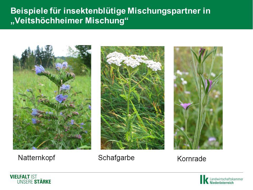 """Beispiele für insektenblütige Mischungspartner in """"Veitshöchheimer Mischung""""  Natternkopf  Schafgarbe  Kornrade"""