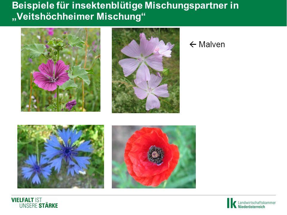 """Beispiele für insektenblütige Mischungspartner in """"Veitshöchheimer Mischung""""   Malven"""
