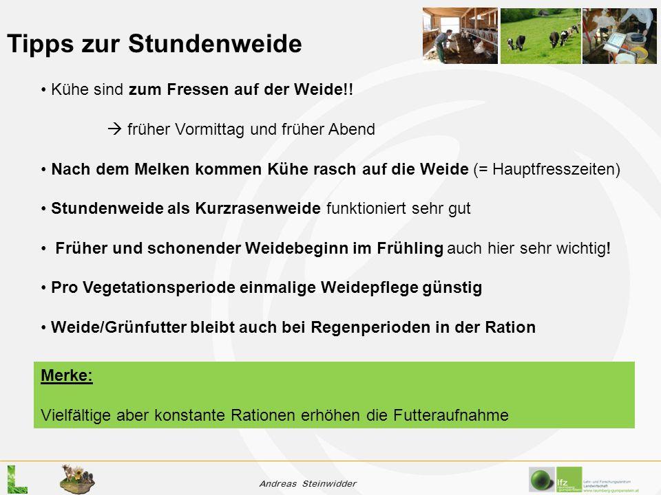 Andreas Steinwidder Tipps zur Stundenweide Kühe sind zum Fressen auf der Weide!.