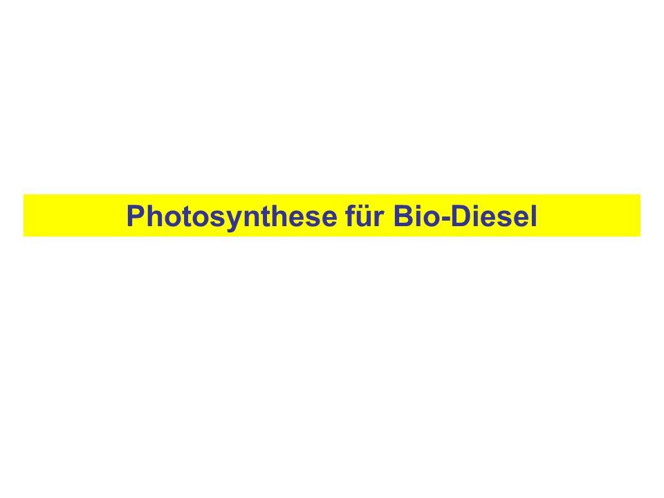 Photosynthese für Bio-Diesel