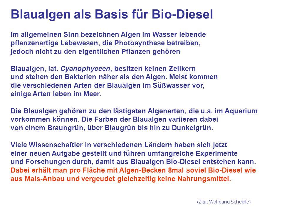 Blaualgen als Basis für Bio-Diesel Im allgemeinen Sinn bezeichnen Algen im Wasser lebende pflanzenartige Lebewesen, die Photosynthese betreiben, jedoch nicht zu den eigentlichen Pflanzen gehören Blaualgen, lat.