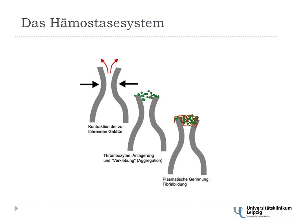 Das Hämostasesystem