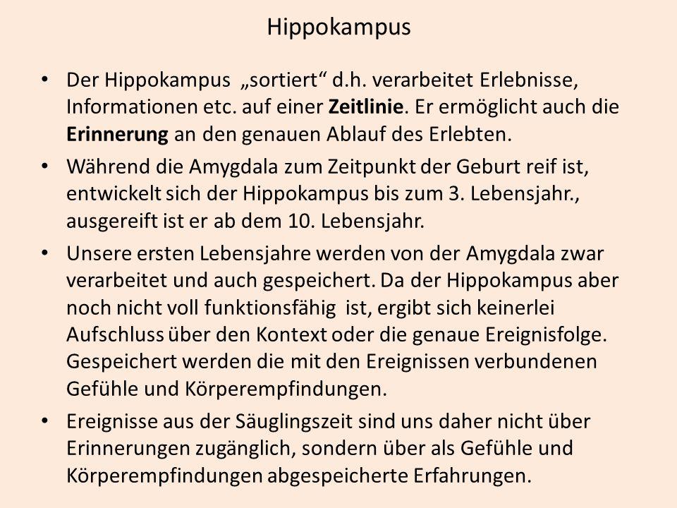 """Hippokampus Der Hippokampus """"sortiert"""" d.h. verarbeitet Erlebnisse, Informationen etc. auf einer Zeitlinie. Er ermöglicht auch die Erinnerung an den g"""