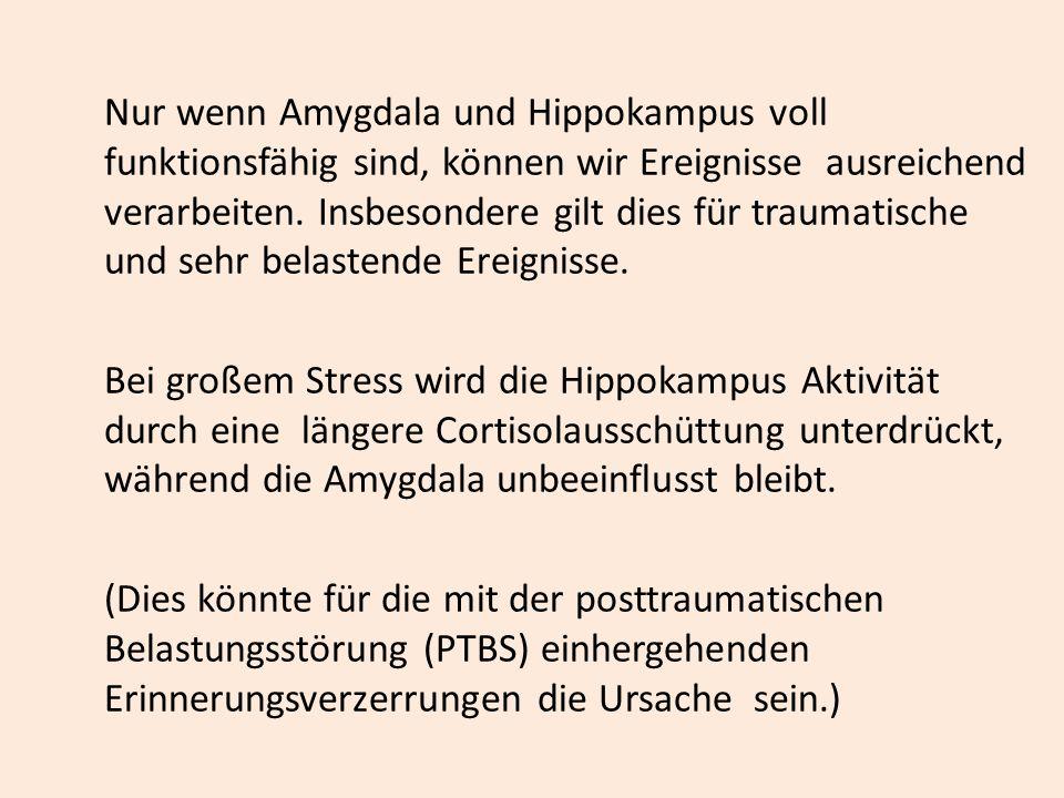 Nur wenn Amygdala und Hippokampus voll funktionsfähig sind, können wir Ereignisse ausreichend verarbeiten. Insbesondere gilt dies für traumatische und