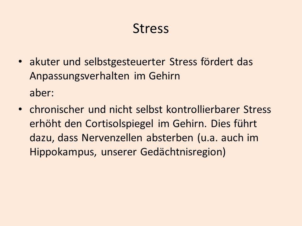 Stress akuter und selbstgesteuerter Stress fördert das Anpassungsverhalten im Gehirn aber: chronischer und nicht selbst kontrollierbarer Stress erhöht den Cortisolspiegel im Gehirn.