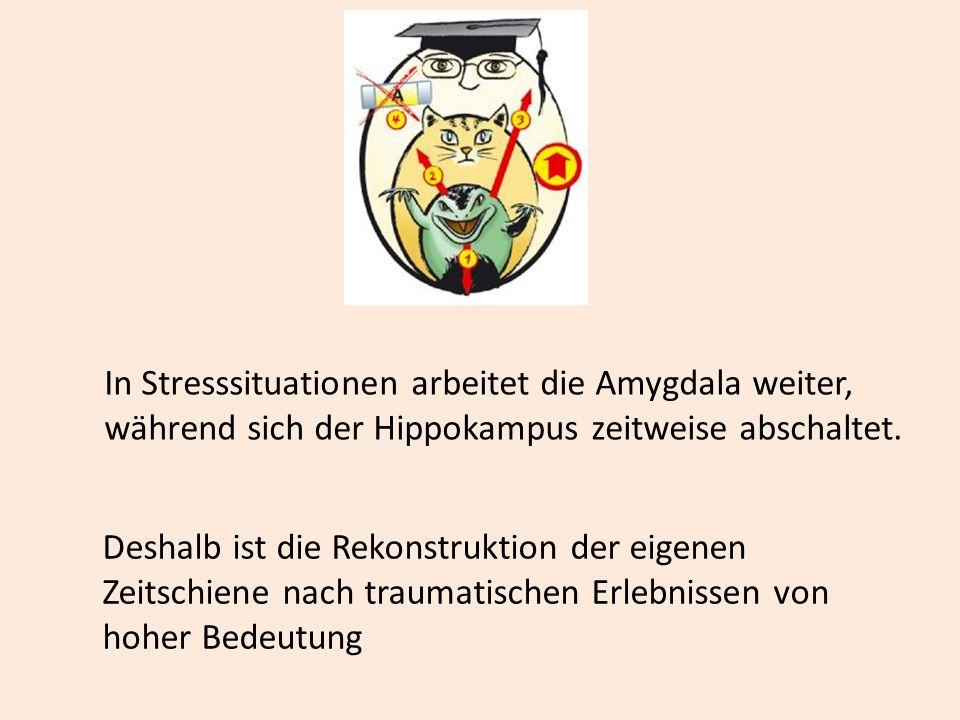 In Stresssituationen arbeitet die Amygdala weiter, während sich der Hippokampus zeitweise abschaltet. Deshalb ist die Rekonstruktion der eigenen Zeits