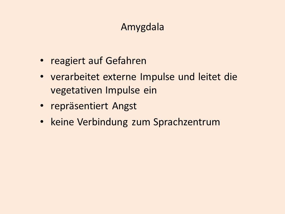 Amygdala reagiert auf Gefahren verarbeitet externe Impulse und leitet die vegetativen Impulse ein repräsentiert Angst keine Verbindung zum Sprachzentrum