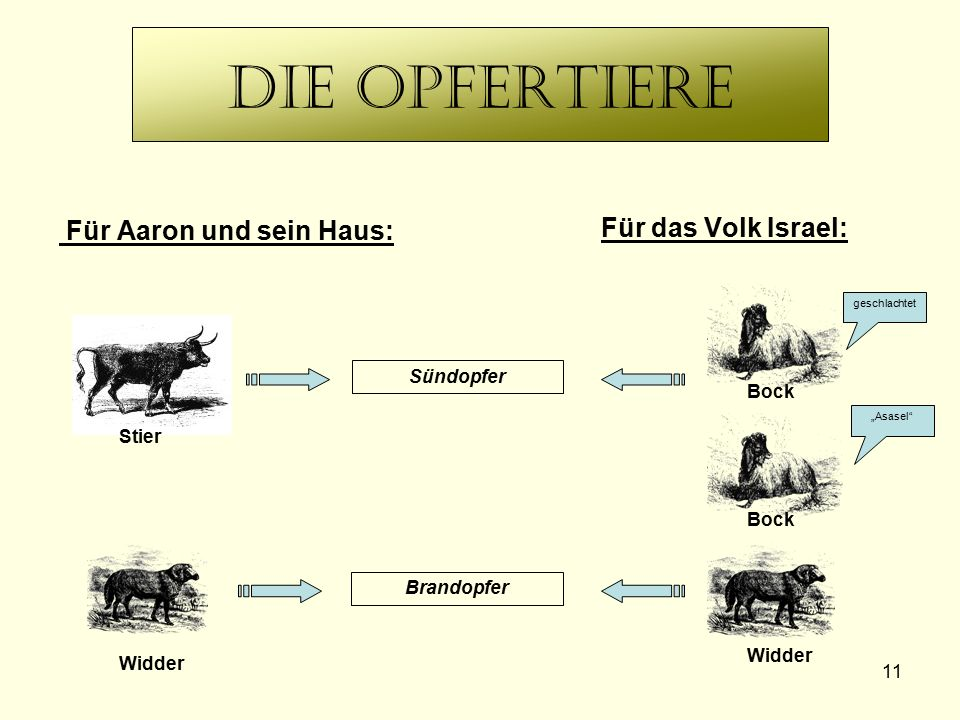 """11 Die Opfertiere Für Aaron und sein Haus: Für das Volk Israel: Brandopfer Sündopfer geschlachtet """"Asasel"""" Stier Widder Bock Widder"""