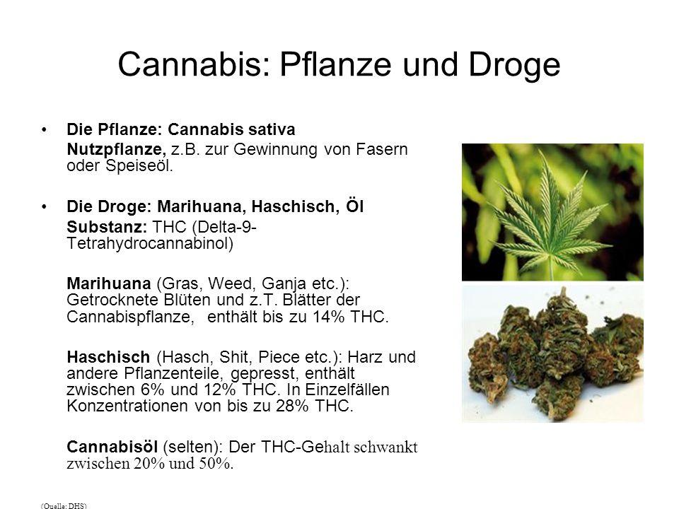 Cannabis: Pflanze und Droge Die Pflanze: Cannabis sativa Nutzpflanze, z.B.