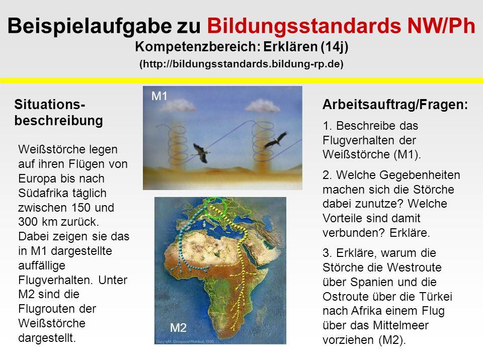 Weißstörche legen auf ihren Flügen von Europa bis nach Südafrika täglich zwischen 150 und 300 km zurück.