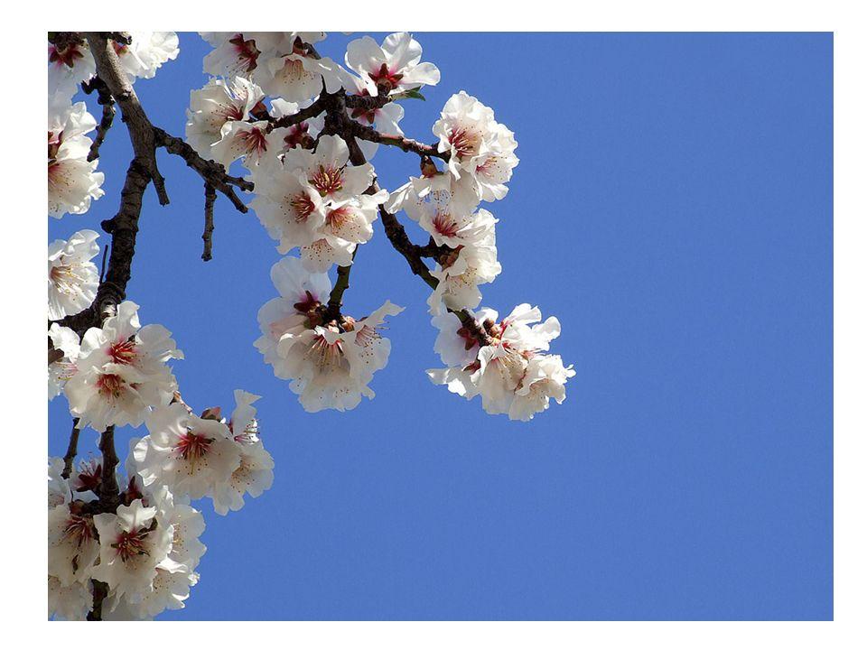Herzlich Willkommen zum Treffen des Pflegenetzwerkes MK in der Kirschblütenresidenz in Iserlohn am 28.